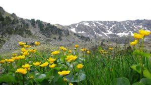 Andorre - Pas de la case